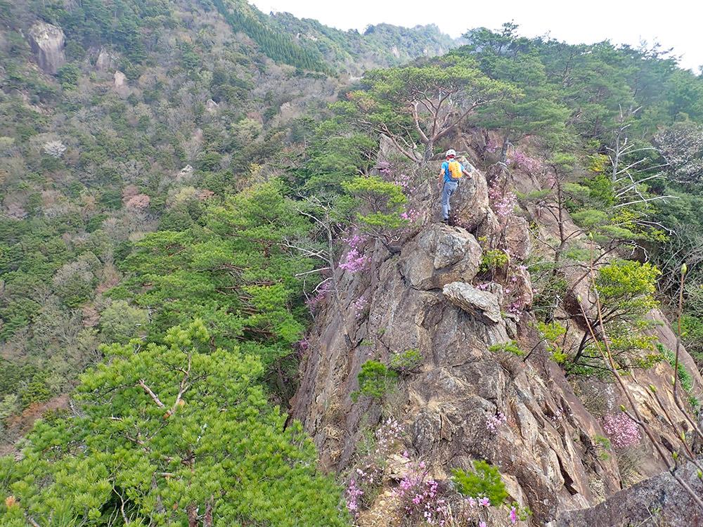 比叡山の岩峰とミツバツツジ(正規登山ルートではありません)