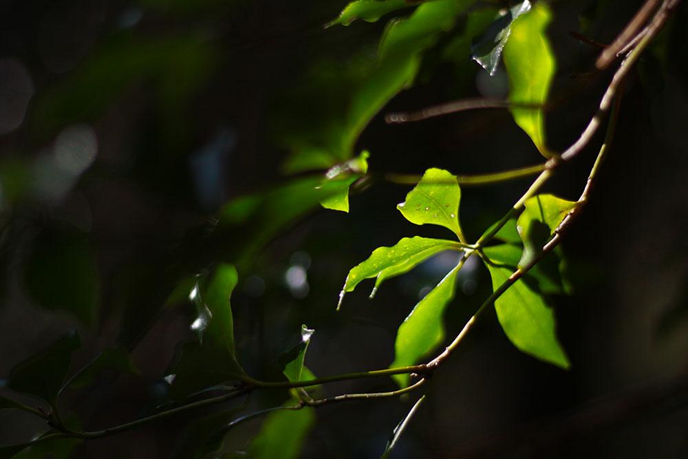 休憩のたびに美しい緑に癒されます