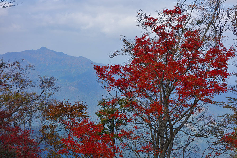 紅葉越しに眺める宮崎県最高峰の祖母山