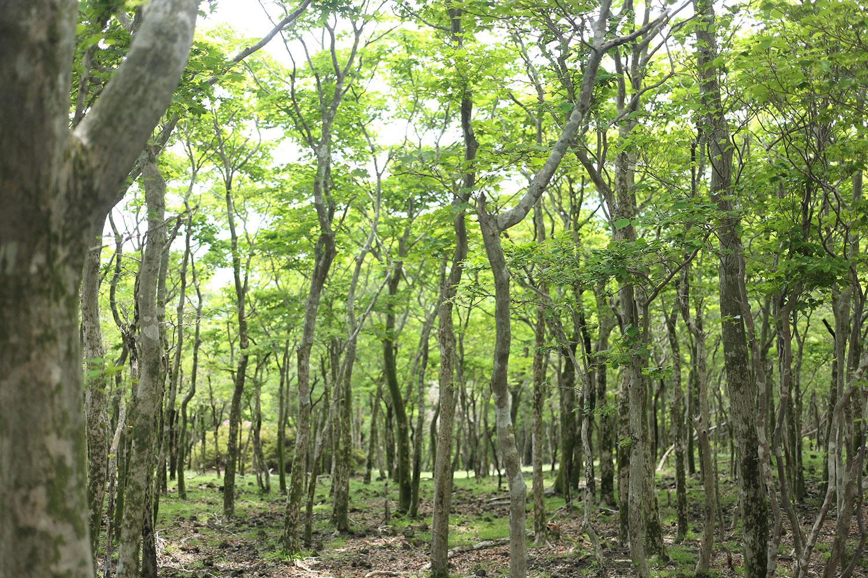 大幡池を越えた後の樹林帯