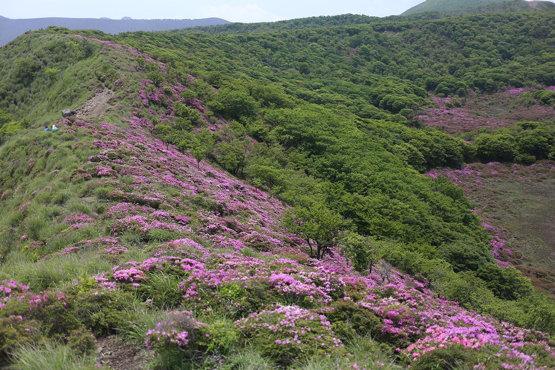 大幡山手前の稜線