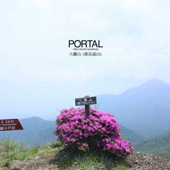大幡山頂とミヤマキリシマ