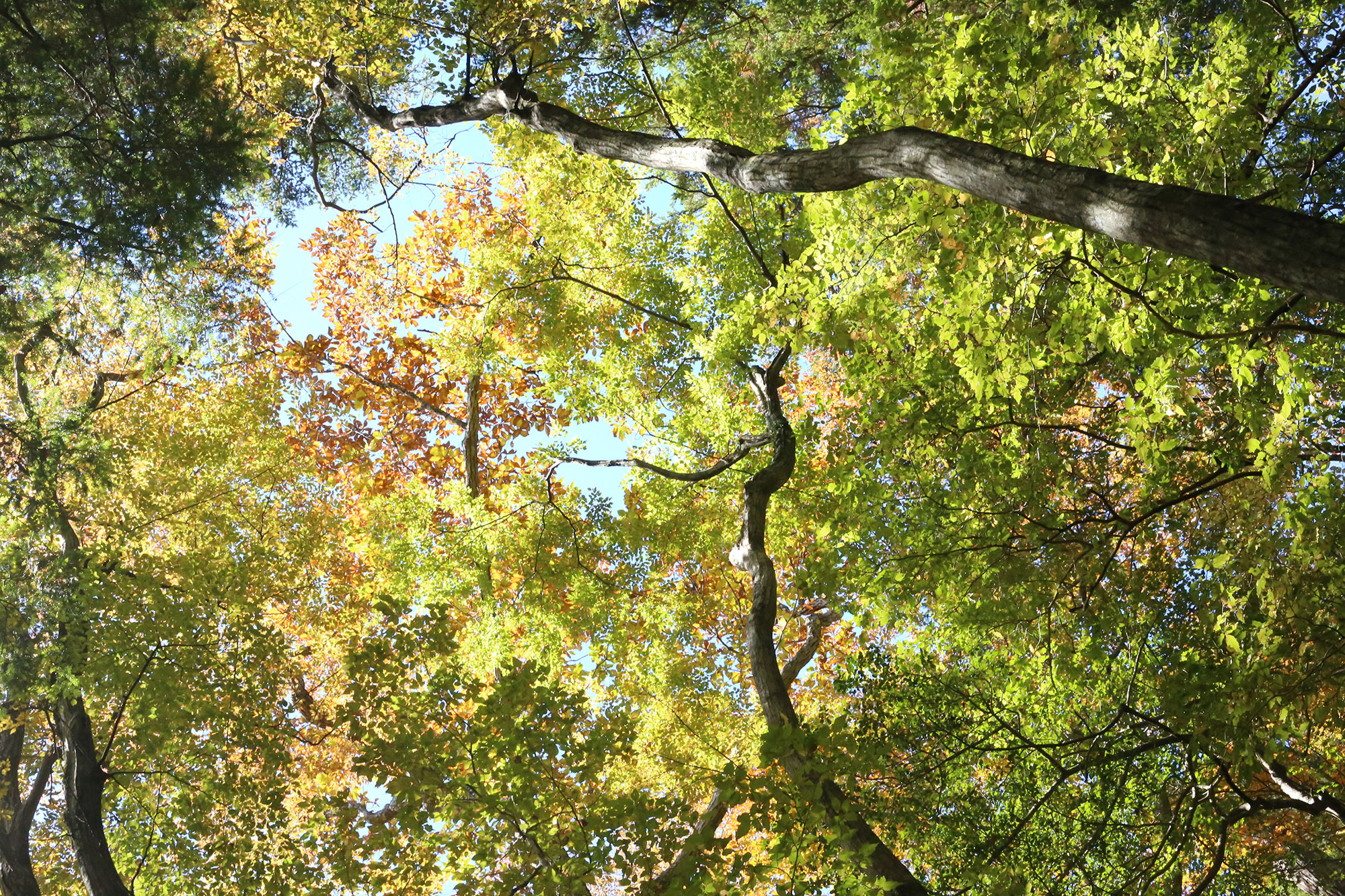 とにかく美しい原生林の森