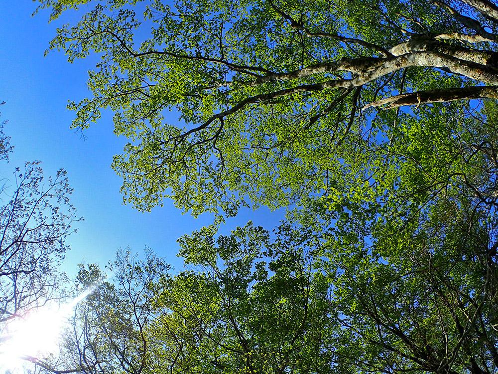 暖かい季節になったことを感じるような美しい緑