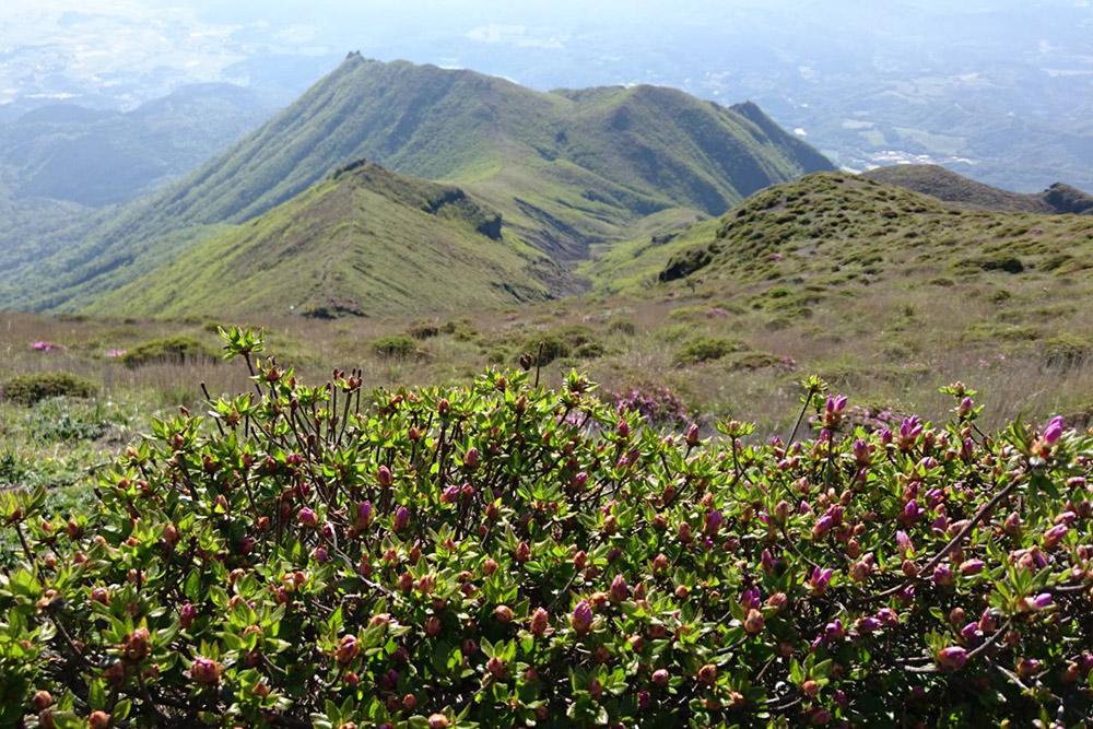 山頂付近のミヤマキリシマはまだのようです
