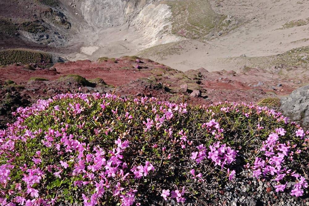 高千穂峰のお鉢とミヤマキリシマ