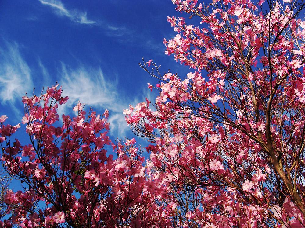狙いはぴったりで、沢山の花を楽しめた縦走路