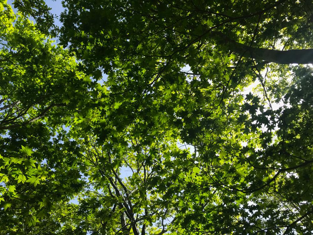 森の中はどこを見上げても新緑。紅葉の時期にもまた訪れたくなります