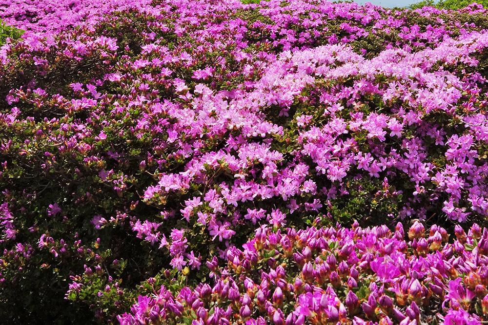 その日の写真を眺めて思い出すのは、花の素晴らしさよりも、皆さんの笑い声