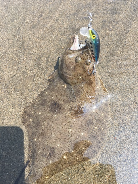 釣ったヒラメのお写真も見せていただきました