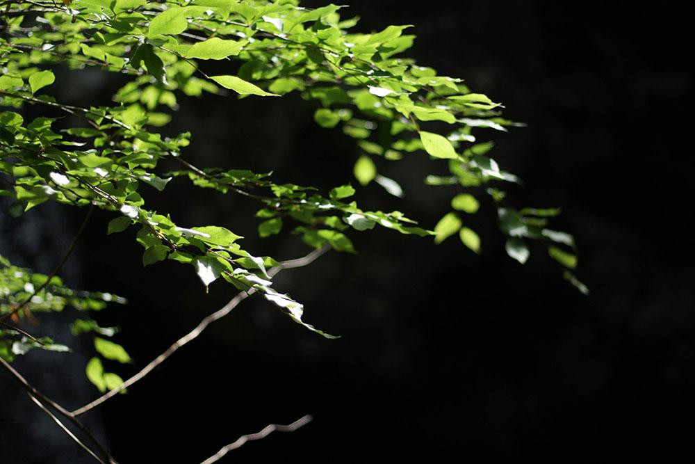 花でなく、ただの緑も美しいものです