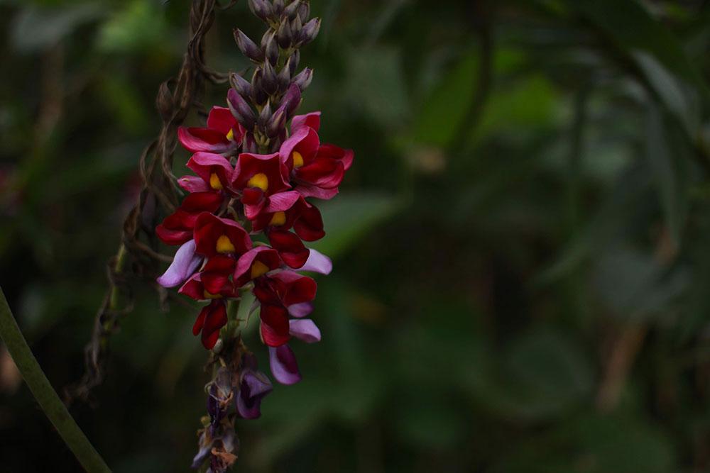 変わった植物を見つけては写真を撮ってみたり