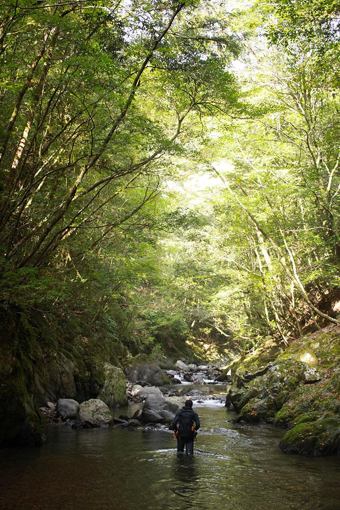 美しい谷の底で緑を楽しみながら散策