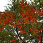宮崎で秋のハイキングを楽しんでみませんか