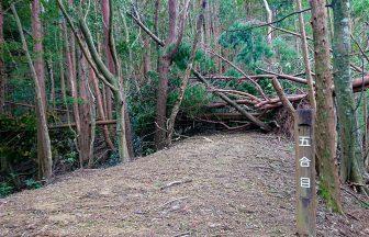 激しく倒れた木々