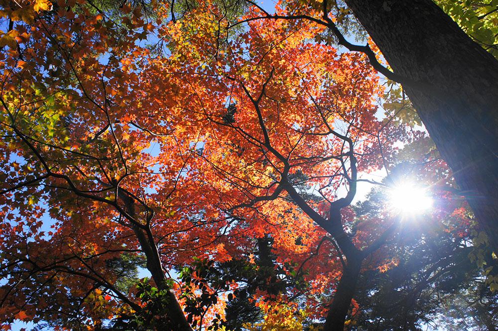 紅葉もとても楽しめたようでした