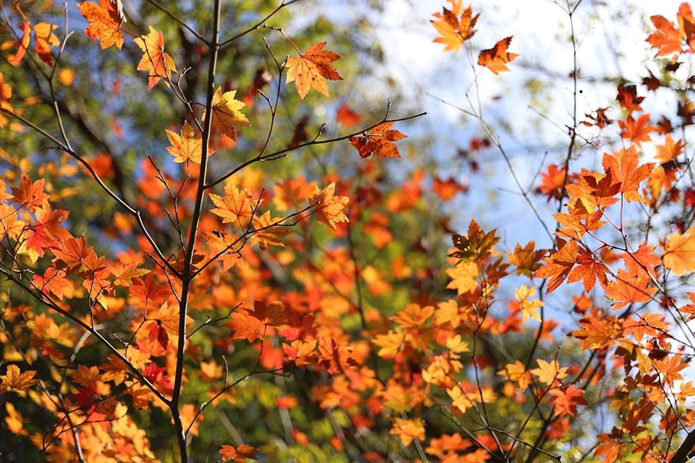 綺麗な紅葉を堪能しながらのドライブ
