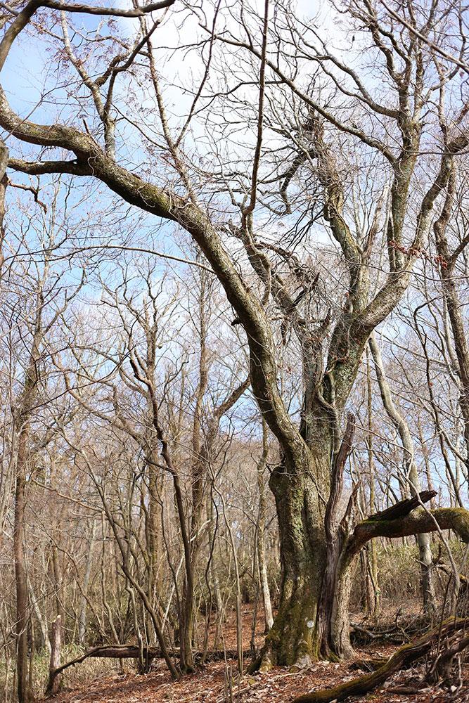 すっかり葉も落ちてすっきりした森