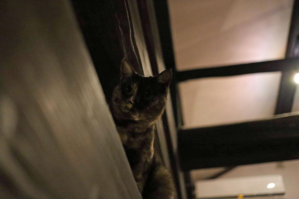 梁の上でくつろぐ猫