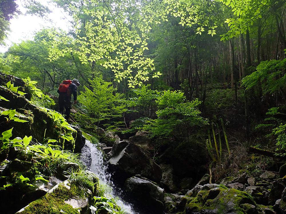 深い森の谷の中で楽しむ素敵な時間に感動