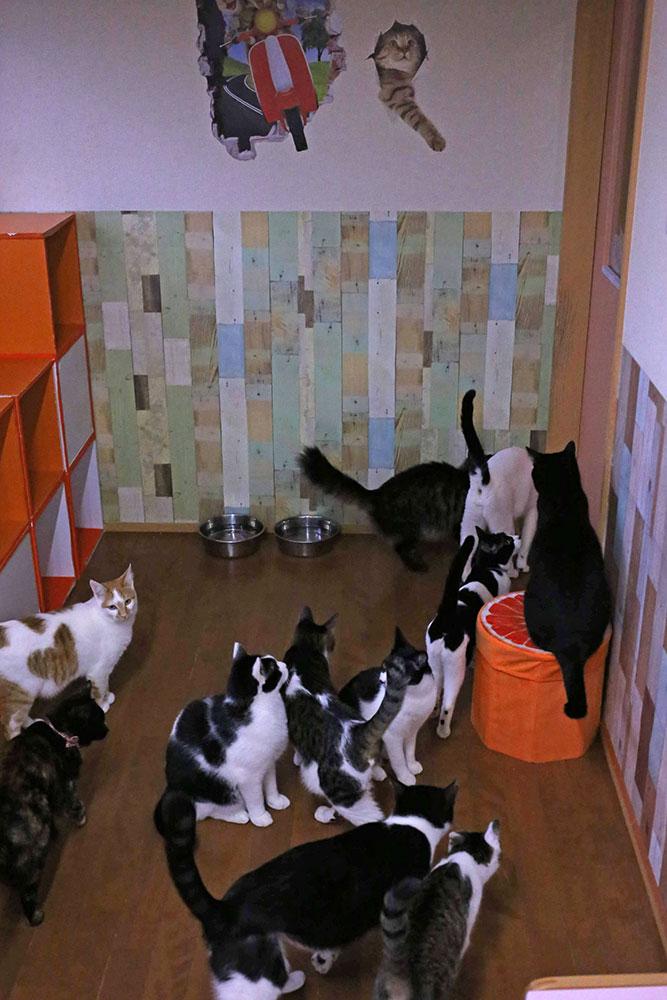 食事の時間が近づくと集まる可愛い猫たち