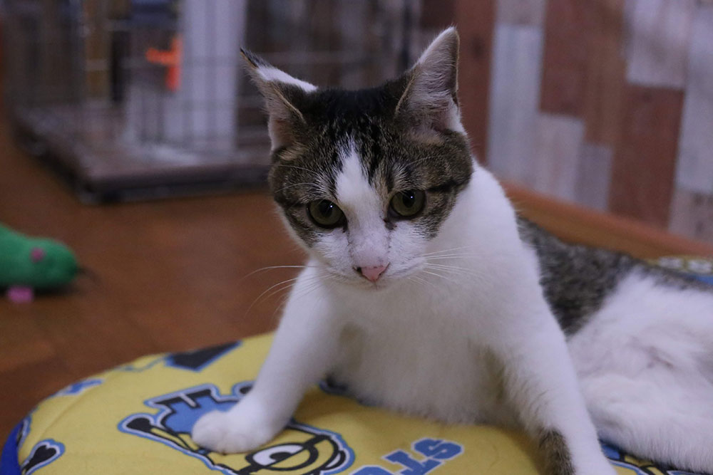 寄付型のねこカフェで猫と戯れてましたが