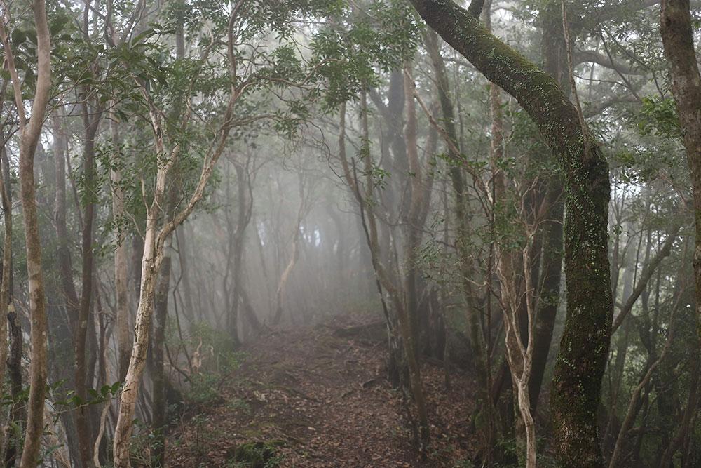 霧に包まれた美しい登山道