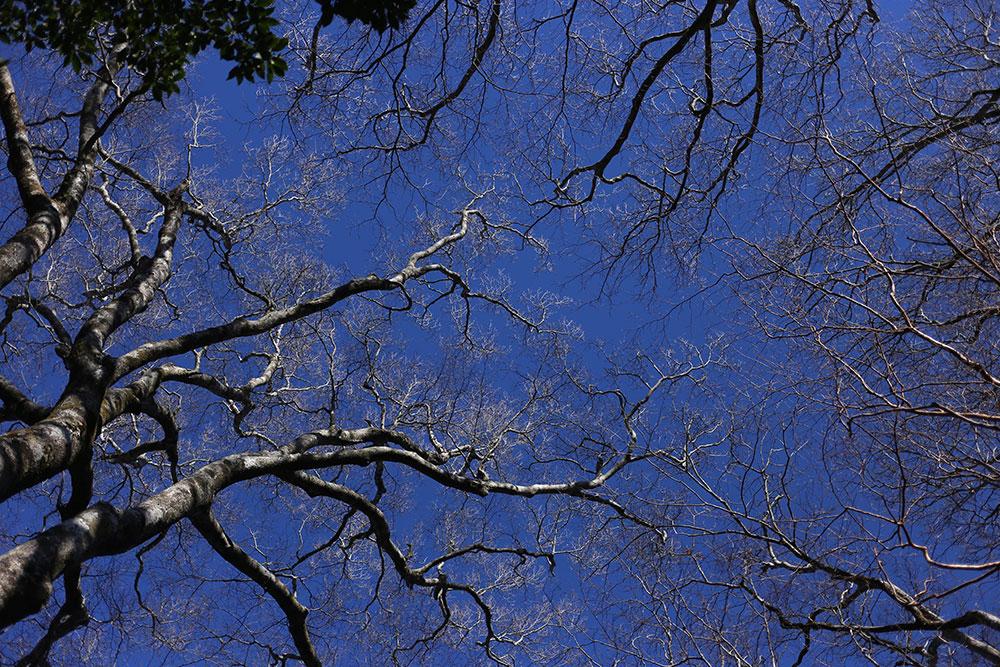 血管のような木々の姿がとても素晴らしい、葉を落とした木々