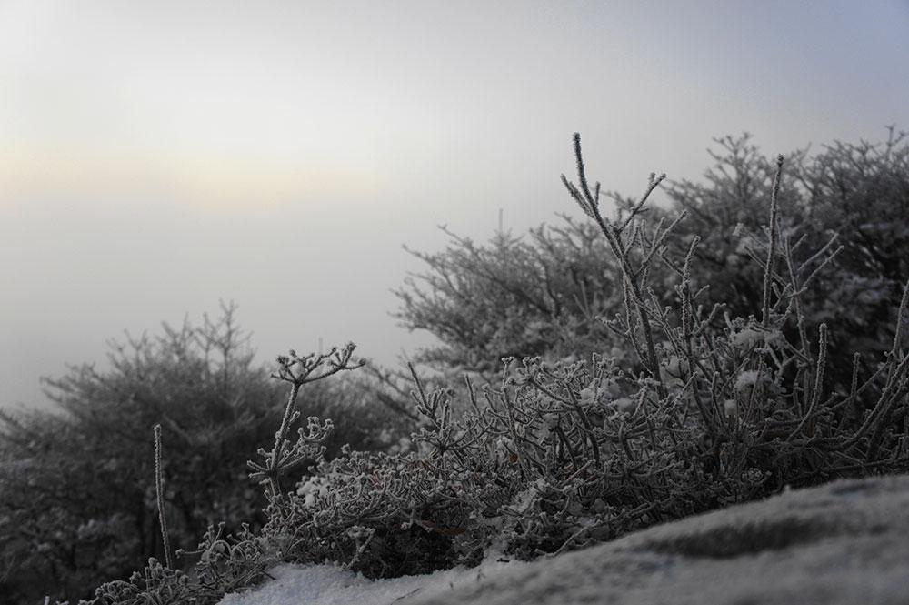 大船山の霧氷