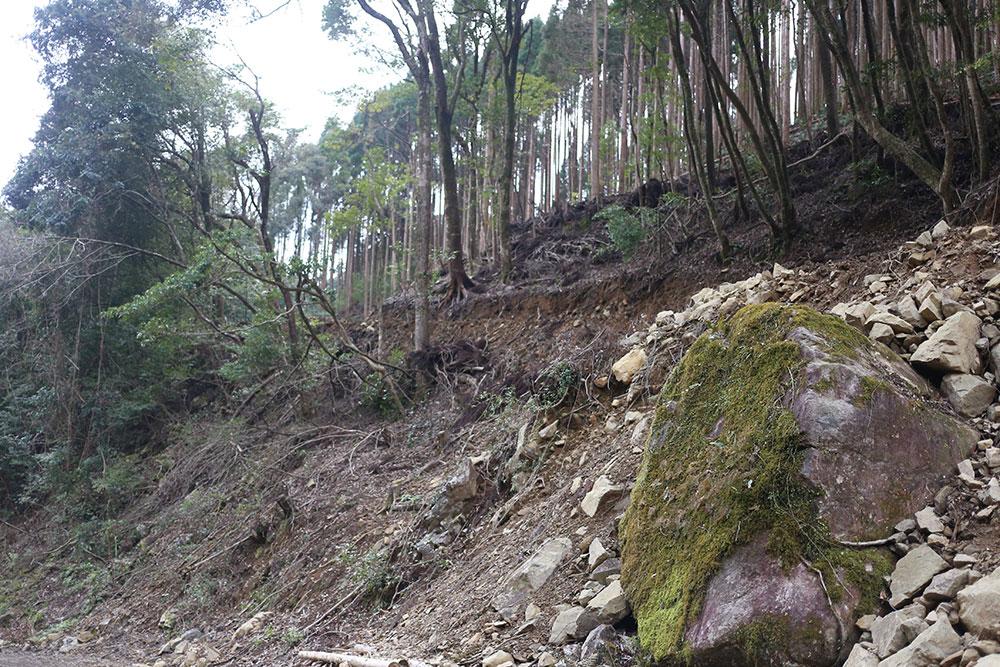 作業道路ができ、木々は伐採されて