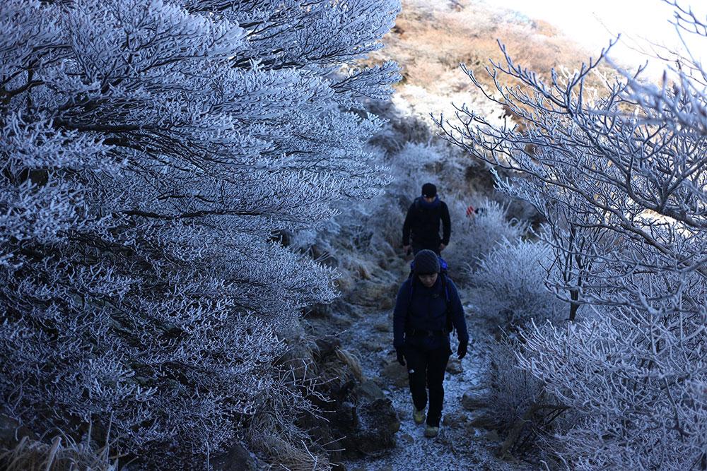 霧氷に囲まれた登山道