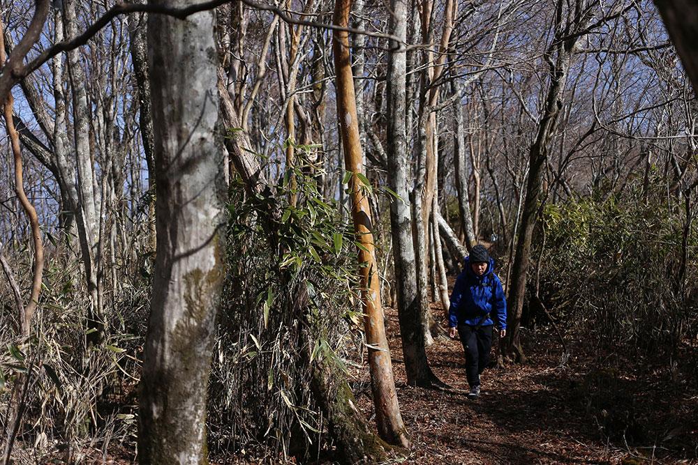 なだらかな原生林の森は非常に快適で心地いいものです