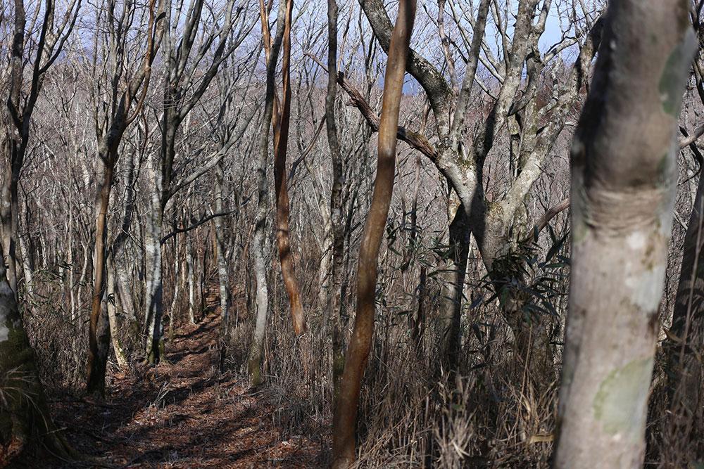 美しい原生林の間を歩く登山道