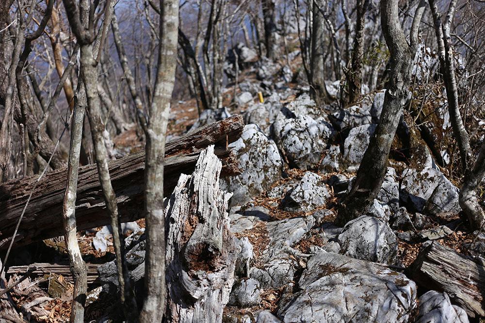 独特な石灰岩ならではの登山道