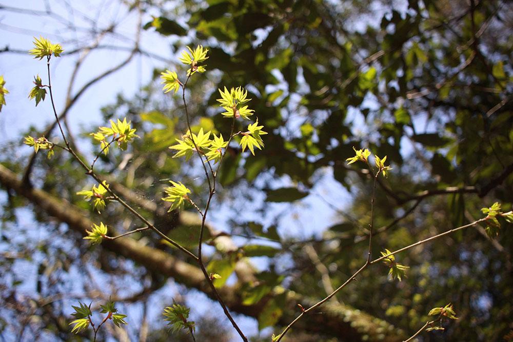 芽吹いている新芽を眺めて春を感じて