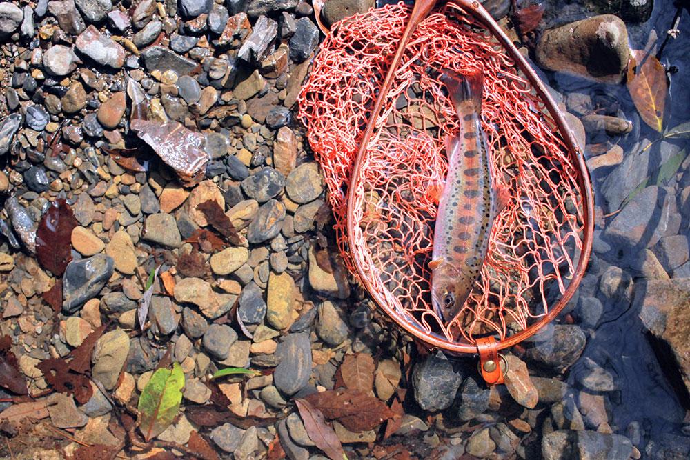 お互い交互に綺麗な魚を釣って
