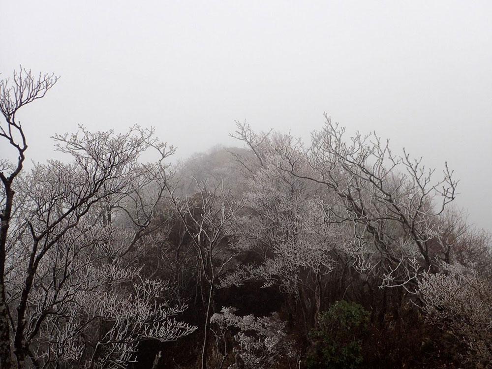 霧氷のお出迎え