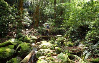 花切山へのルート、こんな綺麗だっけとつい思ってしまいましたが
