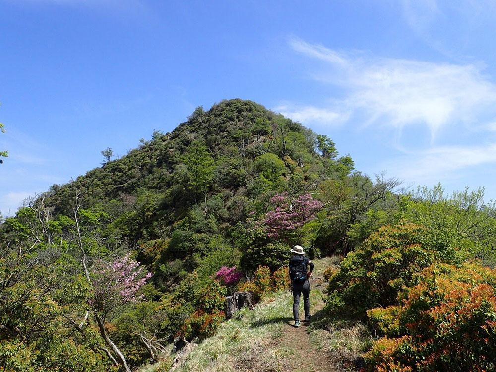 花も混ざって春を感じる石堂山