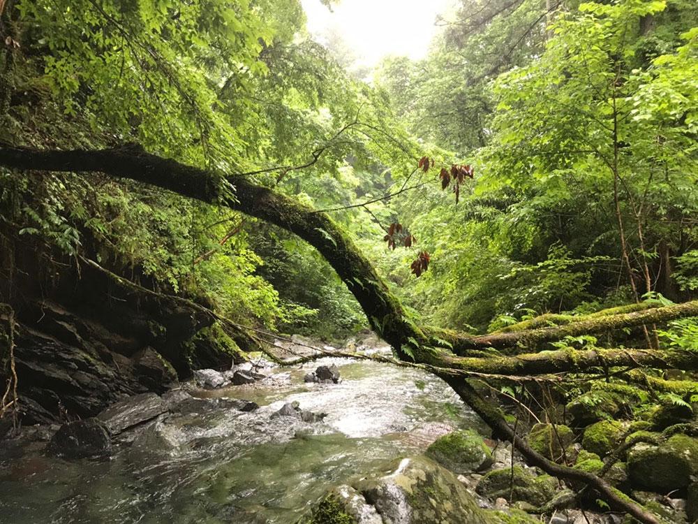 雨の谷(写真:archiさん)