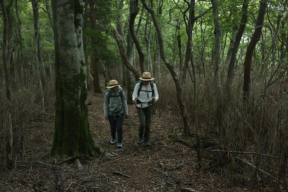 ヒンヤリした美しい森をのんびり話ながら