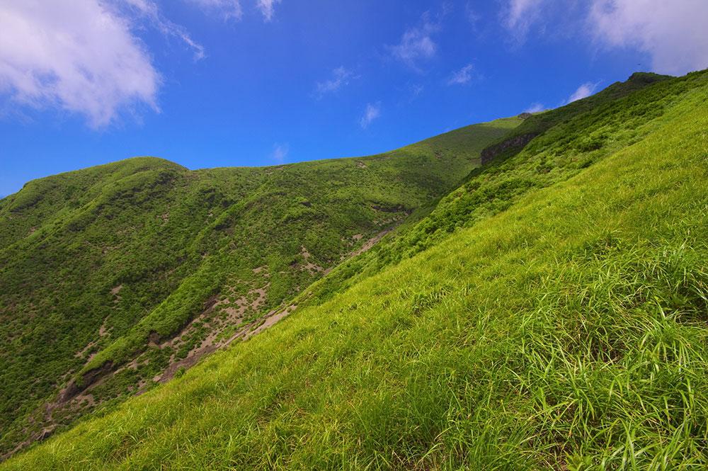 すっきり青空と夏の緑