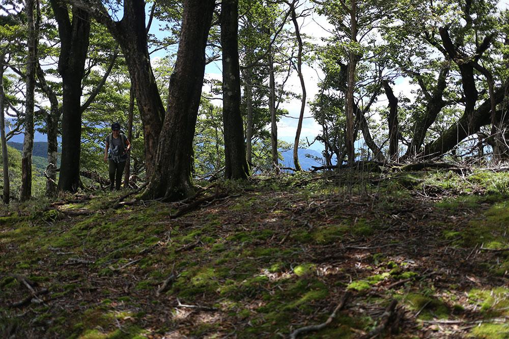 森の木陰でひと休憩