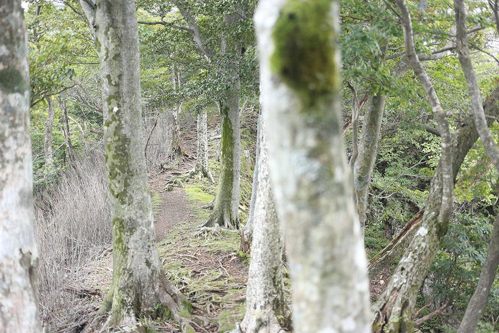 やっぱり原生林の森は楽しいもの