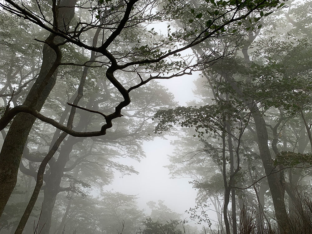 途中の雲の中
