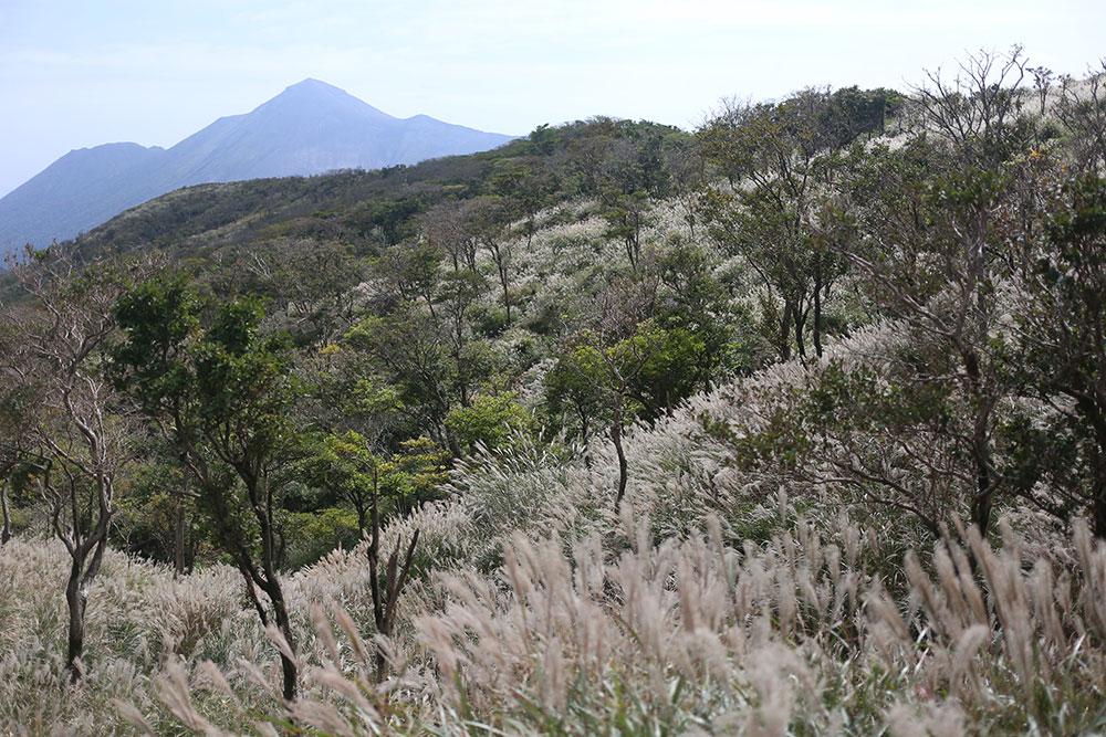 稜線から眺めるススキと高千穂峰