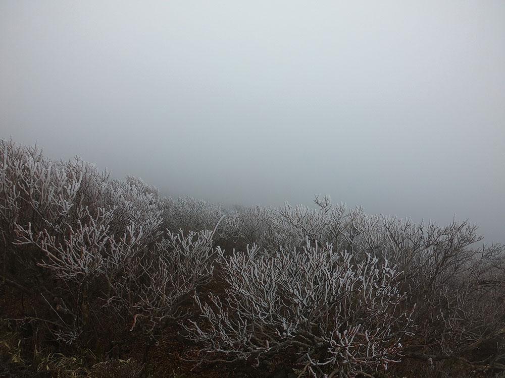 雲の中でしたが、霧氷を楽しんでいただいて幸いです