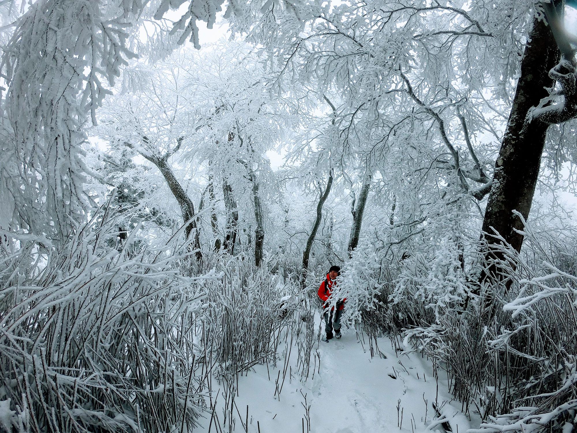 足元は新雪、見えげれば霧氷