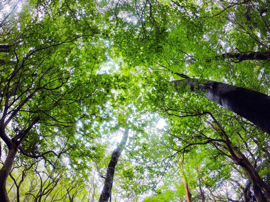 新緑のシーズンです