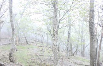 祖母傾山系の原生林にて
